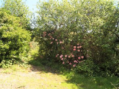 Property image 27 of home to buy in Craig Y Llan (Quarry Road), Llanbedrog